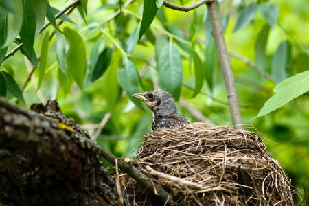The Fieldfare (Latin name: Turdus pilaris) in the wild nature. Stock Photo - 7916925