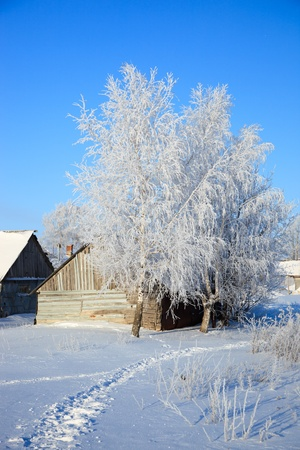 intensely: Beautiful winter landscape with white snow and the blue sky.