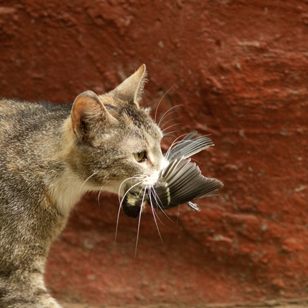 birds eye: The run wild cat has caught a titmouse for a supper to the kittens. Stock Photo
