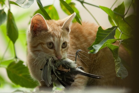 The run wild cat has caught a titmouse for a supper to the kittens. Stock Photo