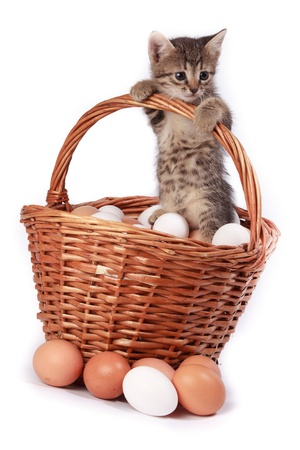 Kitten with egg in front of white background, isolated. The photo is made in studio. Russia, the Ryazan region (Ryazanskaya oblast), the Pronsky District, Denisovo. photo