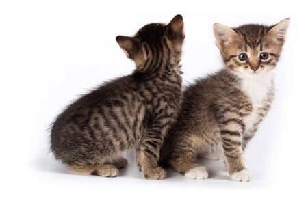 Kittens in studio against a white background. Stock Photo - 11802916