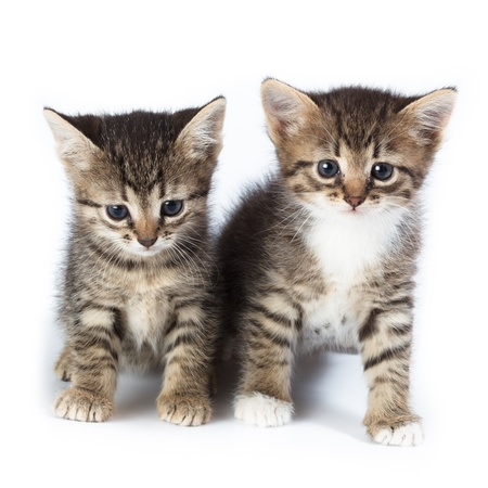 Kittens in studio against a white background.