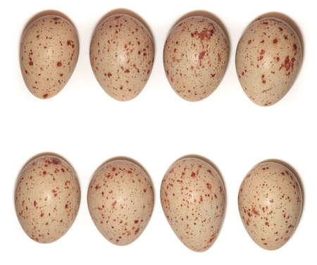 gruiformes: Eggs from the nest of the bird   Gallinula chloropus, Moorhen