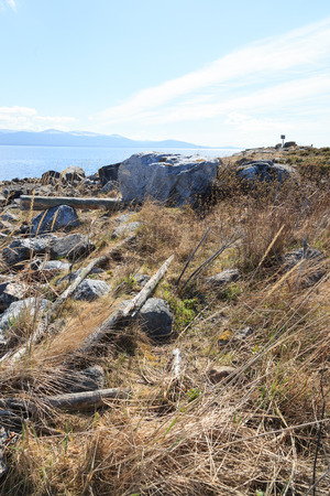 birdhousenest: Nest of the Common Gull (Larus canus). The photo was taken in the Kandalaksha Gulf of the White Sea. Russia, Murmansk region. Island Lodeinoe.