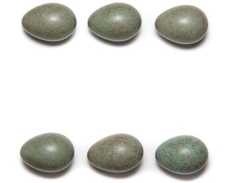 turdidae: Turdus pilaris, Fieldfare. Eggs from the nest of the bird.