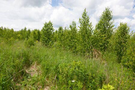 woodland scenery: Anthus trivialis. Habitat and nesting birds. Tree Pipit.