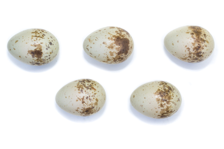 birdnest: The eggs of the Common Shrike in front of white background, isolated. Stock Photo