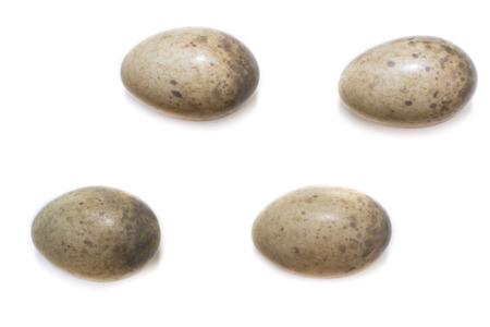 Sylvia nisoria. The eggs of the Barred Warbler in front of white background, isolated. Russia, the Ryazan region (Ryazanskaya oblast), the Pronsky District. 21,41х15,57 22,32х15,17 22,17х15,11 22,02х14,58 mm.
