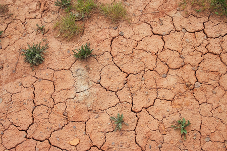 fireclay: Sparse vegetation on the cracked red soil containing fireclay