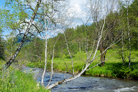 katun: The river Kuyum is a picturesque tributary of the Katun river, the largest river of the Altai mountains Stock Photo