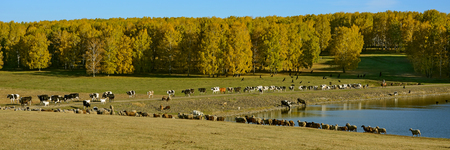 A herd of livestock at a watering place by the pond? Imagens