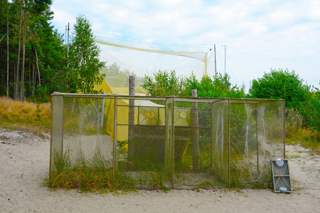 Big trap for birds on the ornithological station, Curonian Spit, Kaliningrad Region