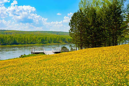 Observation deck on a meadow of yellow dandelions in the Museum-reserve Tomskaya Pisanitsa, Kemerovo region Stock Photo