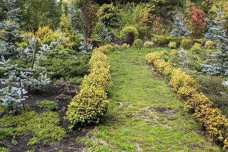 Area of the garden with beautiful lush shrubs, late autumn Stock fotó