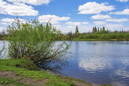 Picturesque Bush on the Bank of the Yaya river, Kemerovo region, Kuzbass, a fine spring day