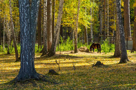 Autumn forest, landscape, bright Sunny day 版權商用圖片