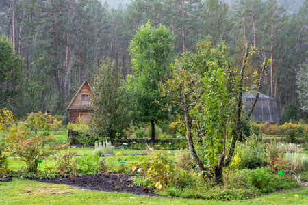 Hut in the garden on the edge of pinery in the rain in early autumn Stock Photo