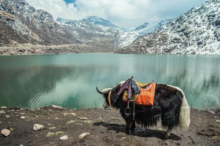 Yak Tsangmo Lake in Sikkim India 版權商用圖片