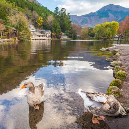 Two ducks at Lake Kinrinko in Yufuin Town Oita, Japan.