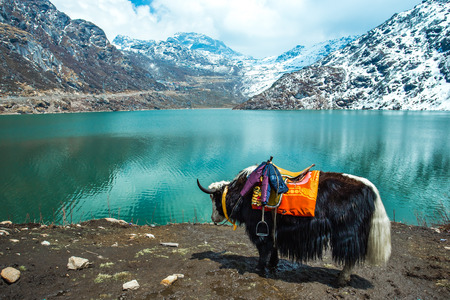 Tsangmo Lake in Sikkim, India.