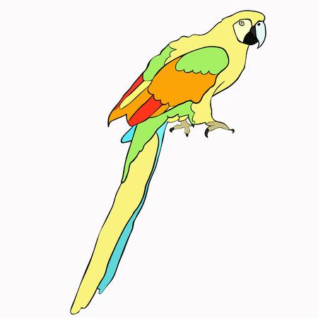 caribbean: Golden the Caribbean parrot sitting vector illustration