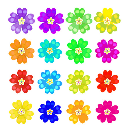 primula: set of spring primrose - primula flowers vector illustration