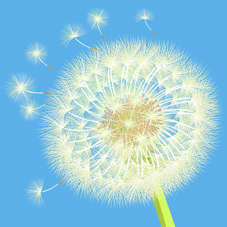 posterity: background dandelion in the wind close up vector illustration Illustration