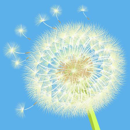 pistil: background dandelion in the wind close up vector illustration Illustration