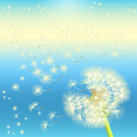 pistil: background dandelion in the wind flying at sunset vector illustration