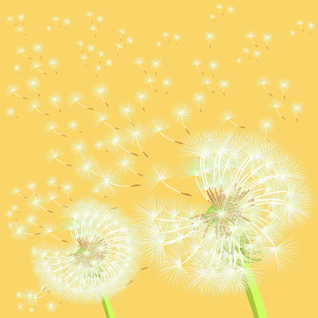 posterity: background dandelion in the wind flying in the sunset vector illustration