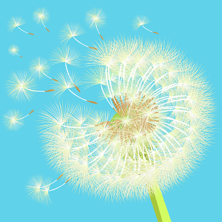 overblown: background dandelion in the wind shatters close up vector illustration
