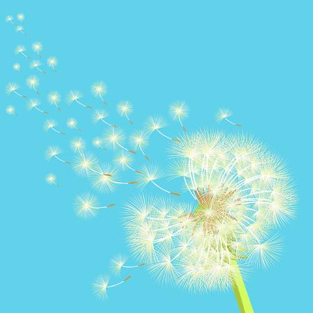 dandelion wind: dandelion flying in the wind vector illustration