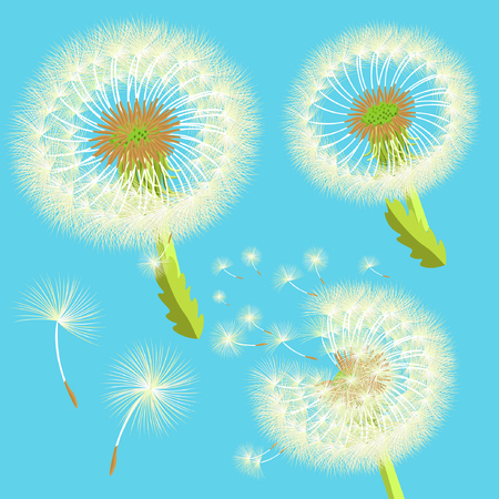 posterity: set of dandelions in the wind vector illustration