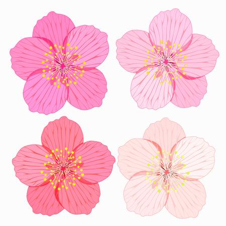 serie di Sakura è fiore illustrazione vettoriale