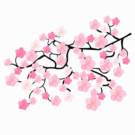 branches of Japanese cherry blossoms vector illustration Illustration