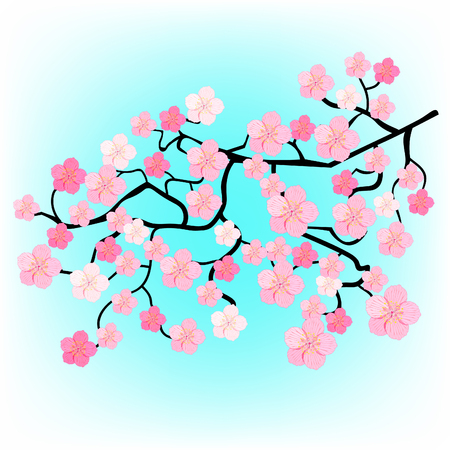 stamen: Japanese cherry blossoms branches on sky background vector illustration