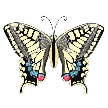 swallowtail: machaon butterfly close up Europe vector illustration