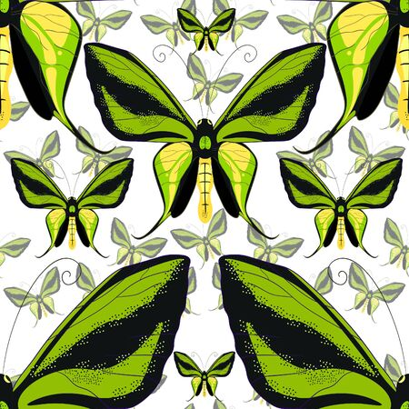 goliath: Ornithoptera paradisea, butterfly wings  bird seamless pattern close up. vector illustration Illustration