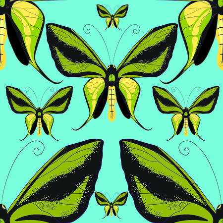Ornithoptera paradisea, butterfly wings of bird seamless pattern macro.vector illustration