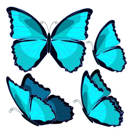 morpho: set blue morpho the butterfly monarch  vector illustration Illustration