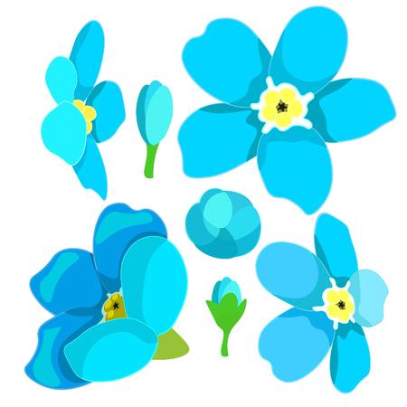 wild flower: set of forget-me-alpine a wild flower  vector illustration Illustration