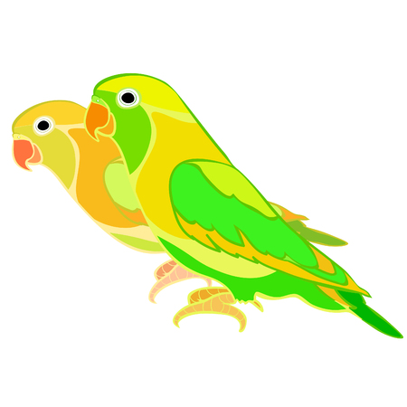 lovebirds parrot couple  with a red beak  vector illustration Illustration