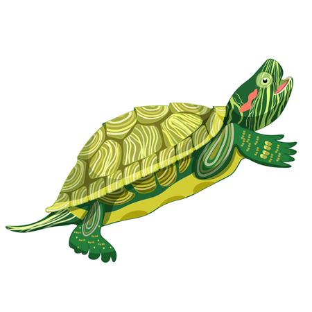 Pond slider turtle green smiling vector illustration Illustration
