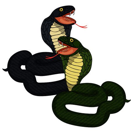king cobra: Green king cobra couple with fangs vector illustration
