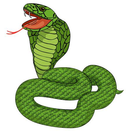 king cobra: green king cobra with fangs vector illustration
