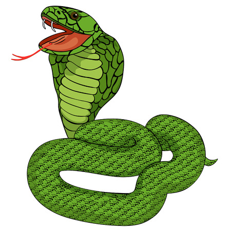 green king cobra with fangs vector illustration