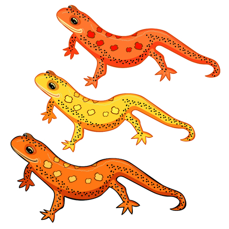 newt: Triton East American red spotted salamanders smiling  vector illustration set