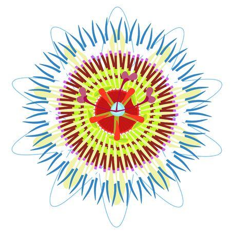 passion fleur vecteur bleu fruit tropical illustration Vecteurs