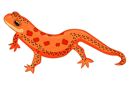 Triton East American red spotted salamanders smiling  vector illustration
